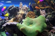 images/Colourful-underwater-world-180.jpg