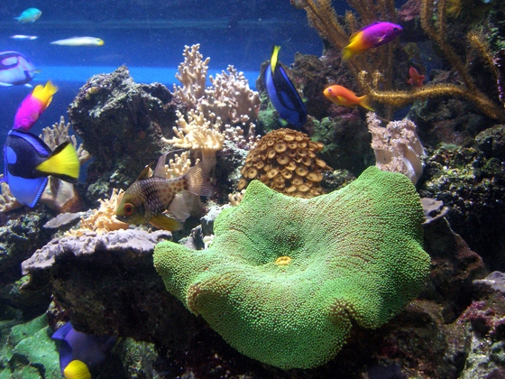 images/Colourful-underwater-world.jpg