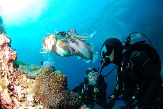images/Diving-explorations.jpg