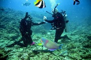 images/Diving-in-tropics-180.jpg