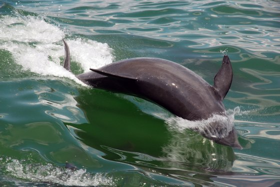 images/Dolphin-play.jpg