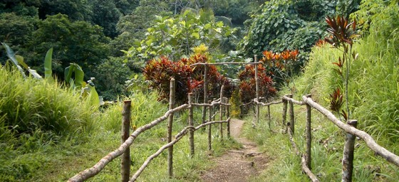 images/Hiking-trail-in-Vanuatu.jpg