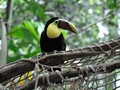 images/Toucan-bird-120.jpg