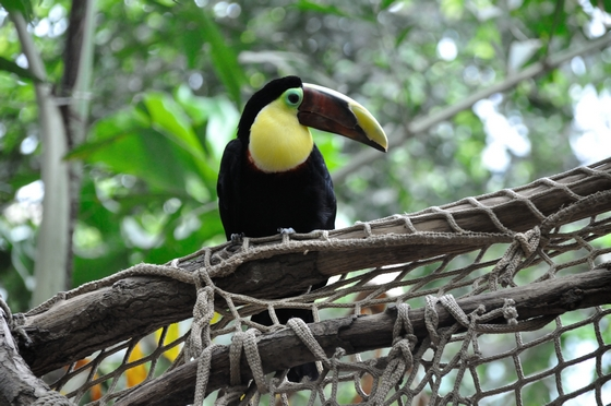 images/Toucan-birdwatching.jpg