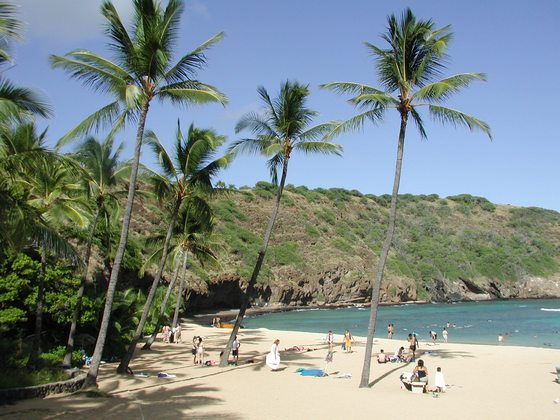Tropical beach with palms and people