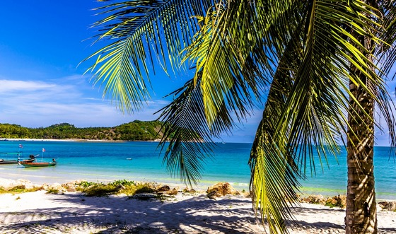 A tropical island beach with a palm