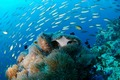 images/Underwater-reef-120.jpg
