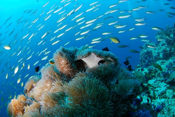 Marine life at underwater reef