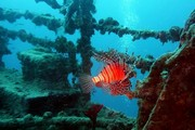 images/Underwater-ship-wreck-180.jpg