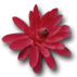 images/icon_flower1.jpeg