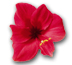 images/icon_flower2.jpeg