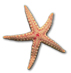 images/icon_starfish.jpeg
